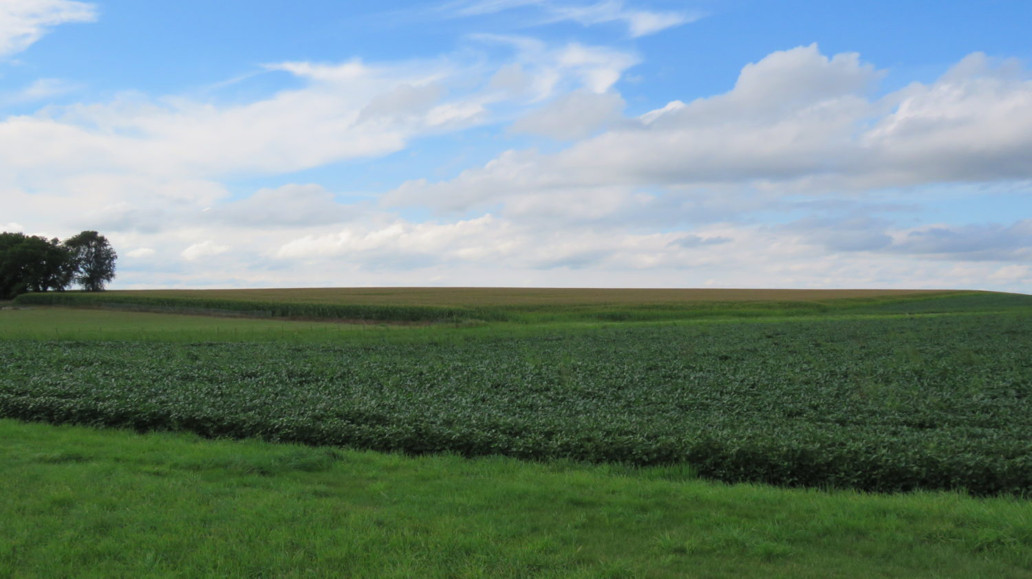 DOUBLE AUCTION! PERSONAL PROPERTY +  ~155 ACRES OF HIGHLY PRODUCTIVE ROCK COUNTY FARMGROUND SOLD $8500/acre - image 4