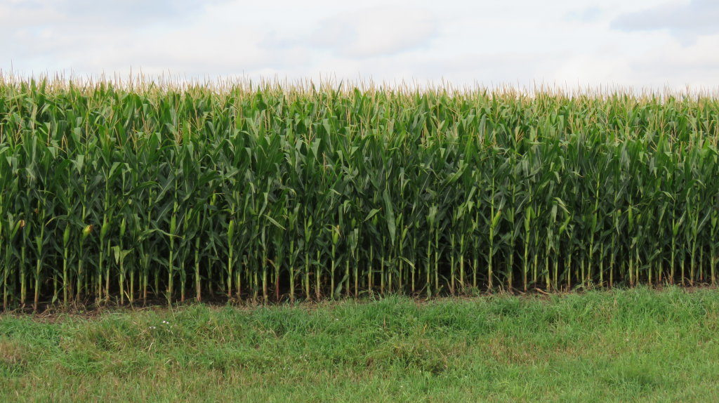 Approx. 155 Acres of MN Farm Ground - Image 1